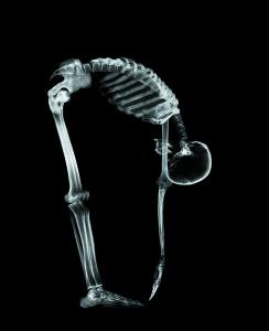 skeleton-244x300